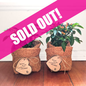 SOLD OUT CHILI PLANT