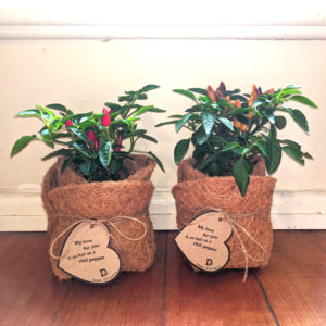 Two potted chili plants, on with red fruit, one with yellow fruit