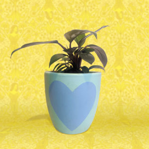 Philodendron Congo plant in blue heart painted pot