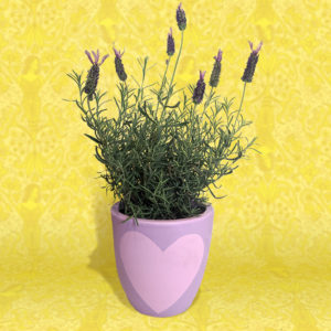 Lavender plant in purple heart hand-painted pot