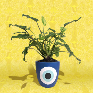 Giant Xanadu Philodendron plant in blue evil eye painted pot