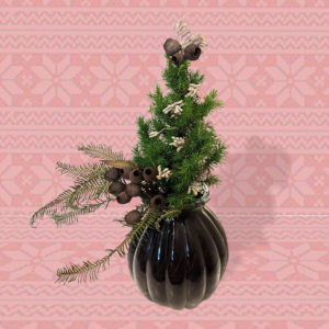 A small living Christmas tree potted in a glass bauble-like vase, decorated with dried fern, gum nuts, and silver kangaroo paw
